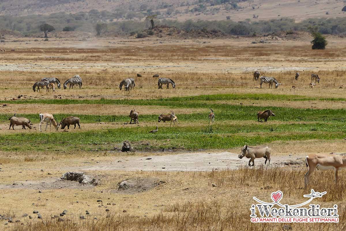 ANIMALI DELLA SAVANA IN TANZANIA
