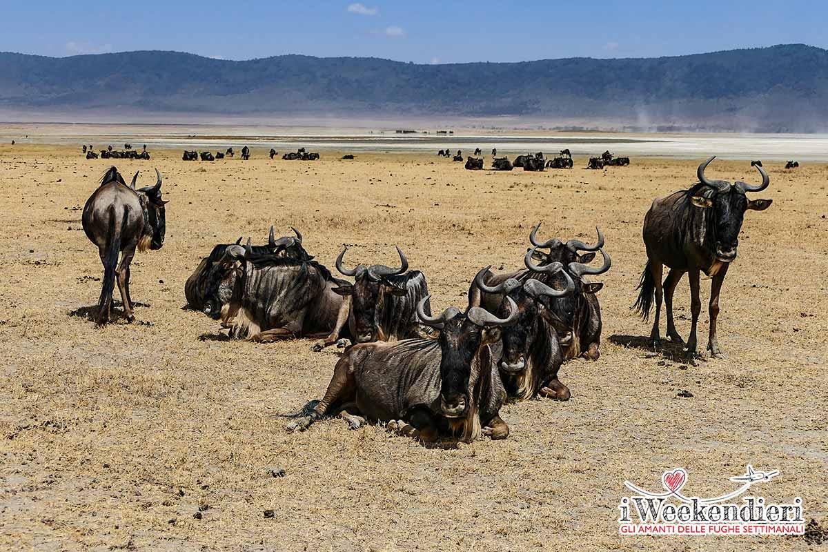 animali nel serengeti