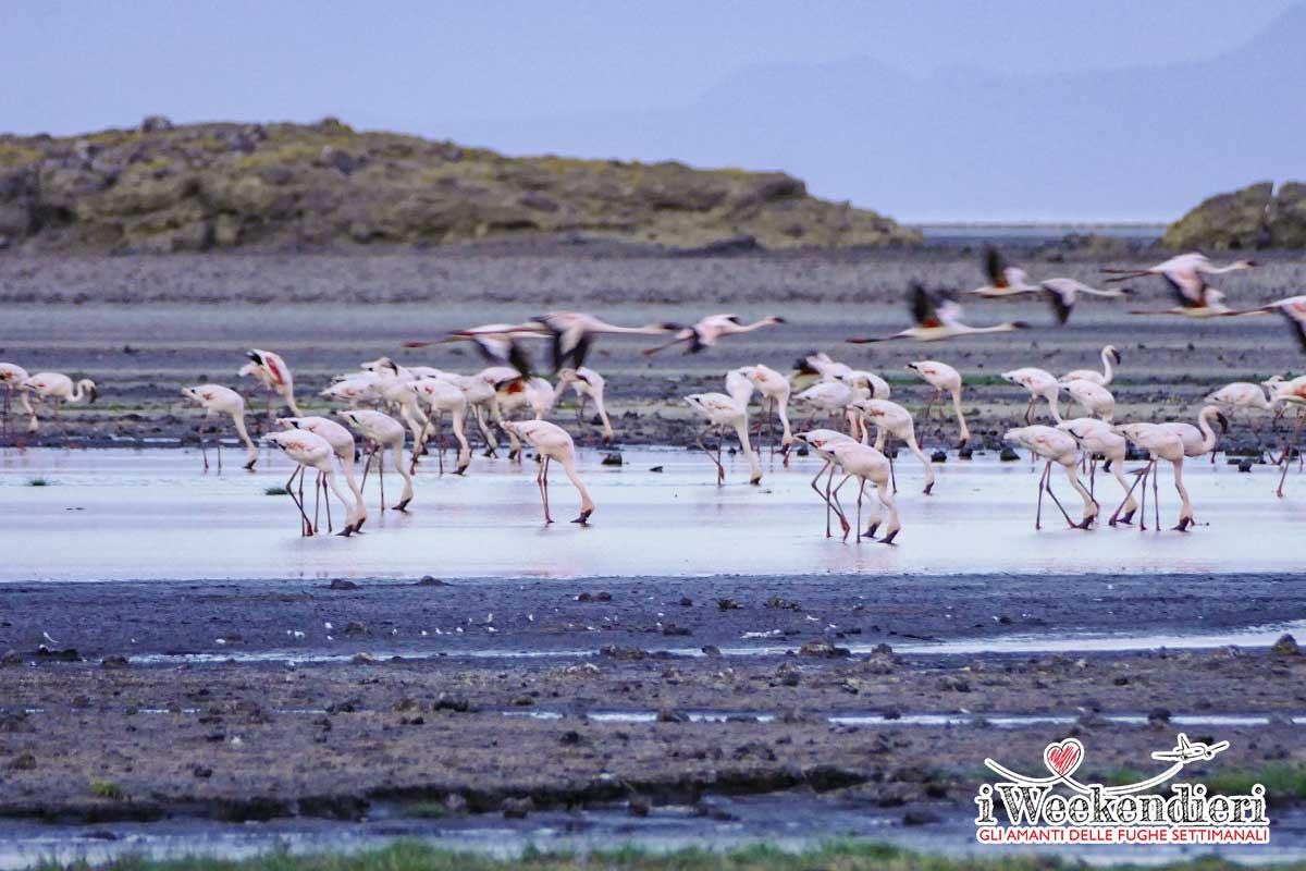 lago natron fenicotteri che si abbeverano