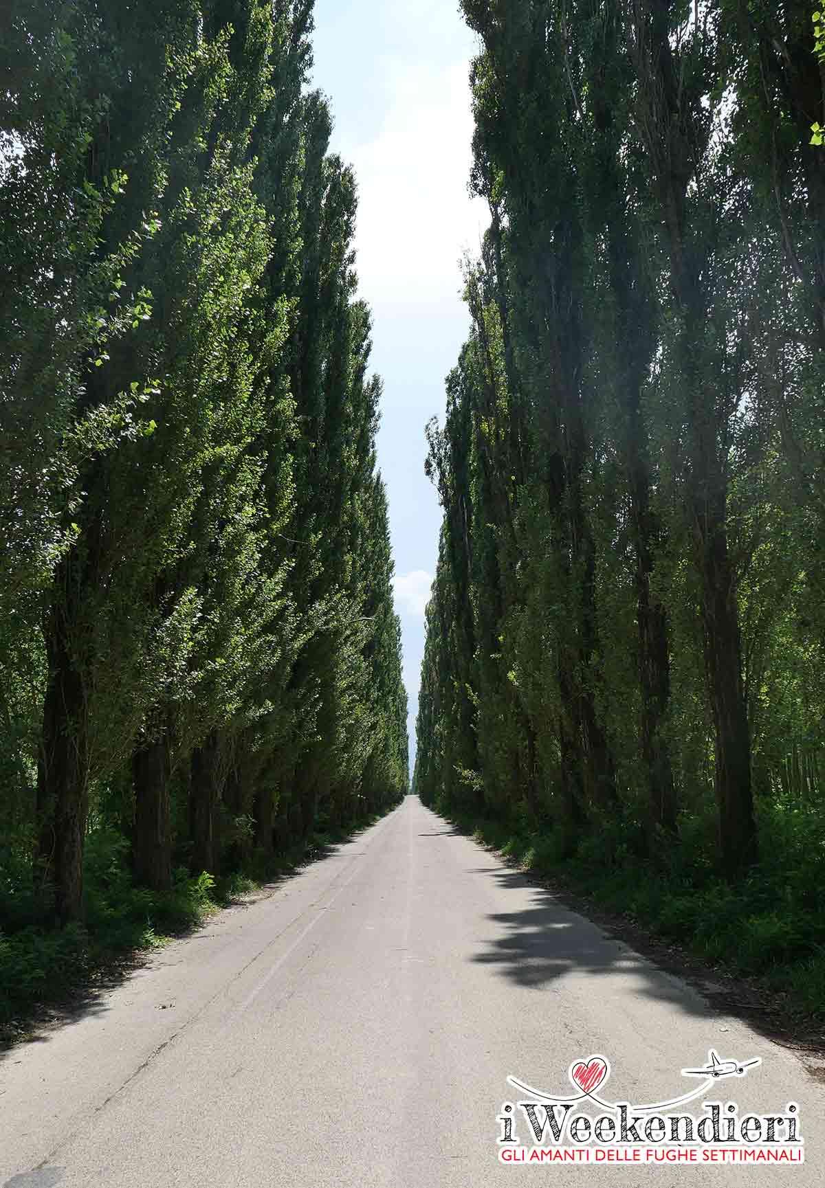Gualtieri Reggio Emilia