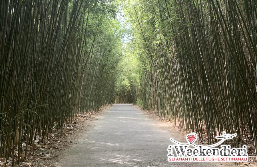 labirinto di bambù