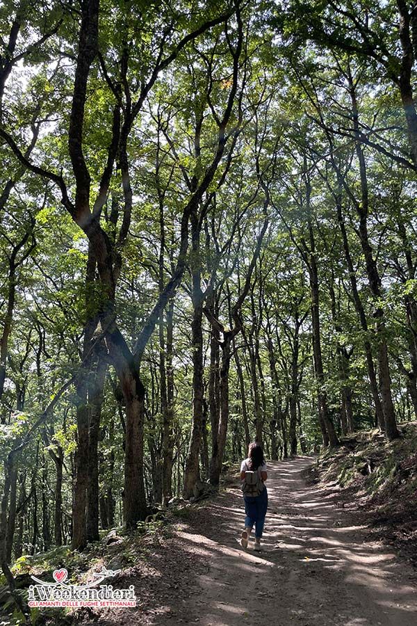 Nebrodi: Bosco di Malabotta
